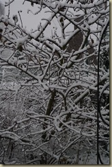 sneeuw 2010 029 (Large)